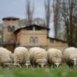 Un fermier francez și-a înscris 15 oi la școală. Ce l-a determinat să facă asta